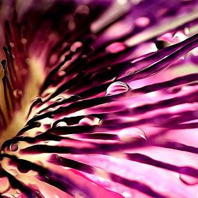 Maracuja flower by Emanuel Correia - Flowers Single Flower