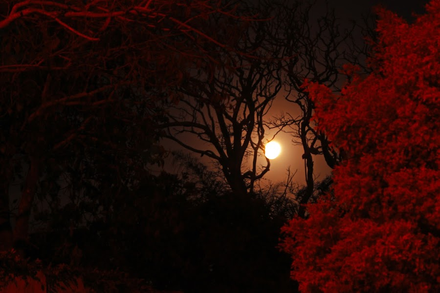 Moon Depth by Ruari Plint - Landscapes Starscapes ( nigh shot, red nature, moon, depth, nightscape,  )