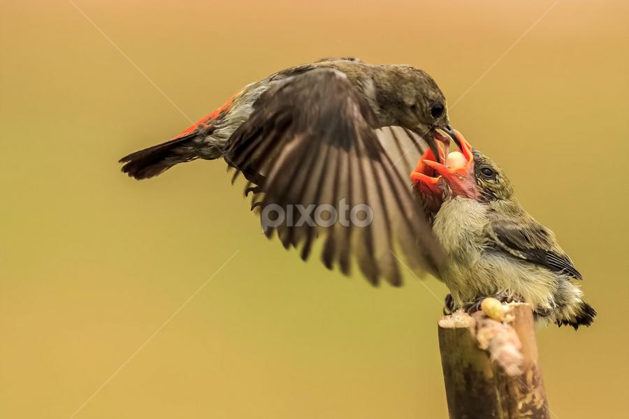Feeding Time by Their Mom by Husada Loy - Animals Birds