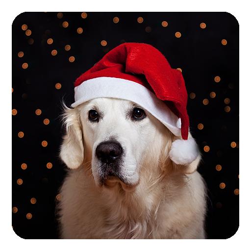 聖誕狗動態壁紙 個人化 App LOGO-APP試玩
