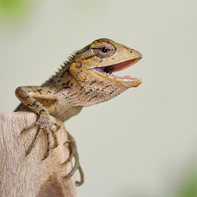 Ready to attack! by Lessy Sebastian - Animals Reptiles