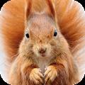 Squirrel Wallpaper APK