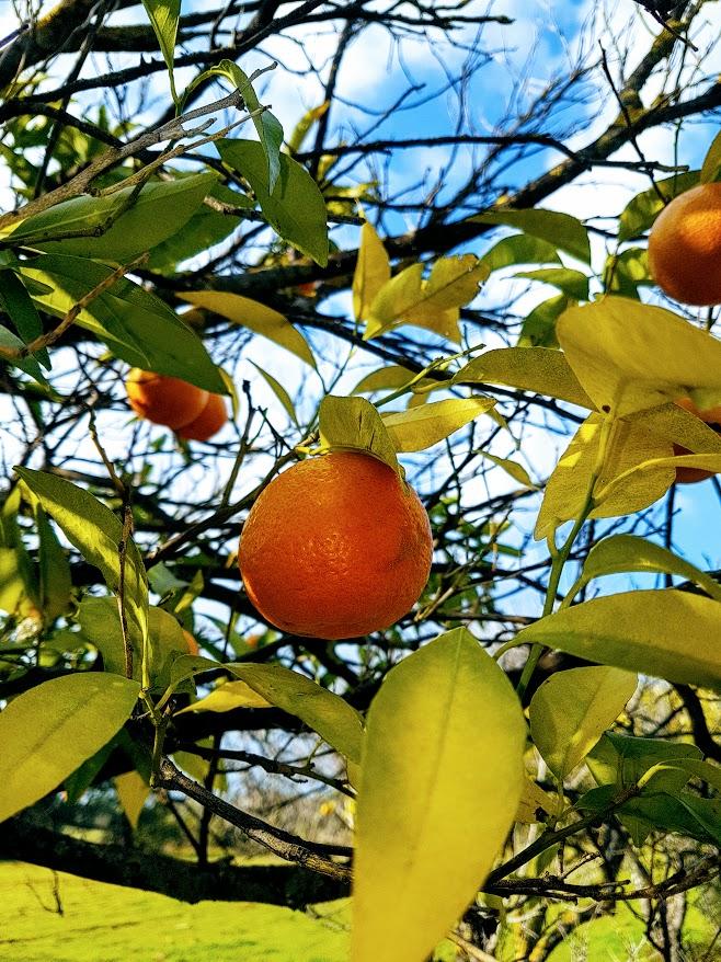 Algarve, Appelsiininkukka, UNKNOWN PORTUGAL Appelsiini Portugalissa