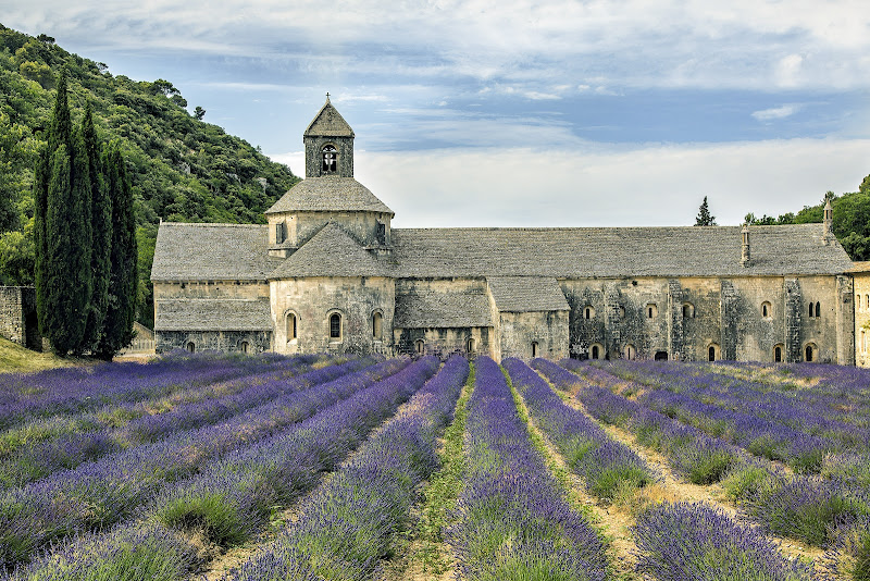 Lavander field in Provence di dome_pe