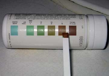 Las tiras de inmersión en orina para hemoglobina muestran un cambio de color positivo.