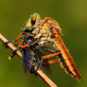 Enjoying.... by Vincent Sinaga - Animals Insects & Spiders