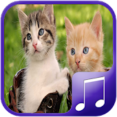 Cat Sounds – Cat Noises App