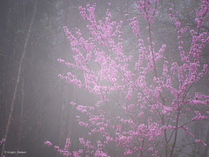 Photo: March 19, 2012 - Foggy Spring #creative366project curated by +Jeff M and +Takahiro Yamamoto