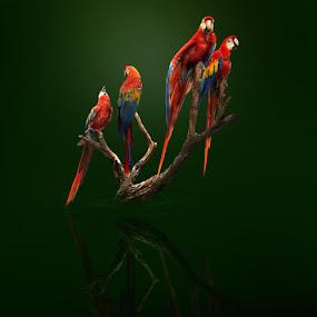 4 by Zainal Arifin  - Digital Art Things