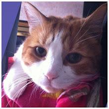 Photo: Hide and seek #cat #catstagram #catoftheday #instamood #instadaily #instagood #pet #animal #eye #intercer - via Instagram, http://instagr.am/p/MeOQSlJftW/