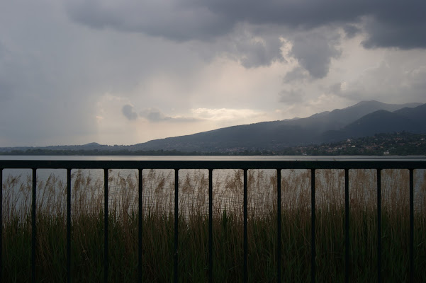 natura in gabbia di samu19