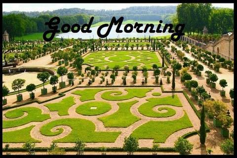 Good Morning Greetings Apk Download Apkpureco