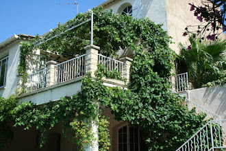 Photo: Our Wisteria on the left is now taking over from the vine on the right