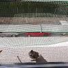 Herrerillo capuchino / Crested tit