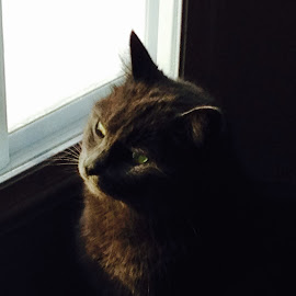 Bird Watching by Mary Hines - Animals - Cats Portraits (  )