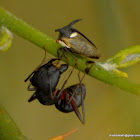 ant & tree hopper