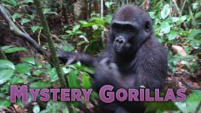 Mystery Gorillas thumbnail