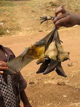 Photo: Bats for sale