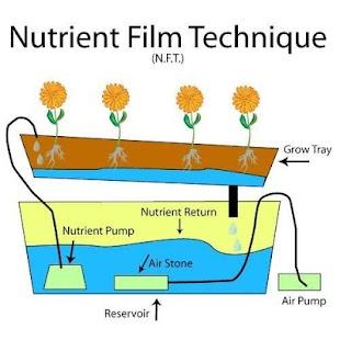 Systém hydroponických technik - náhled