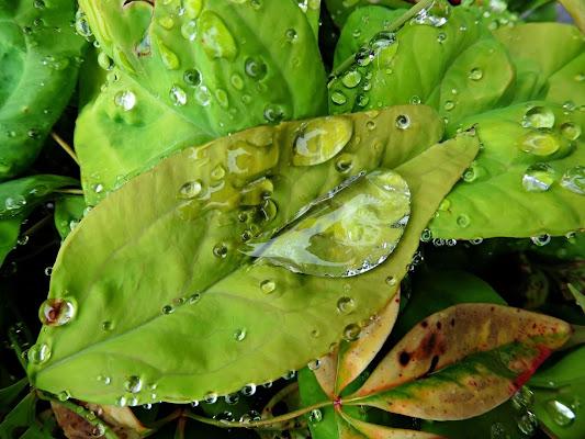 Gocce di pioggia su tutto... di Gabry