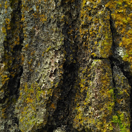 tree bark by Achmad Hanifudin - Nature Up Close Trees & Bushes (  )