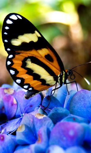 3D Butterfly live wallpaper HD