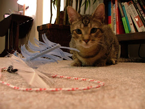 Photo: The toy taunts him.