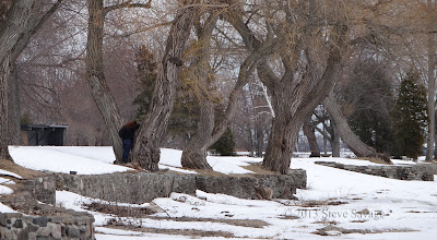 Photo: Taking a picture or climbing a tree?