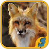 Wild Animals Puzzle Games: WildLife America