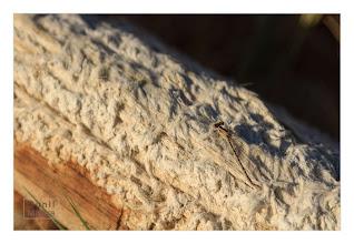 Photo: Eastern Sierras-20120715-59