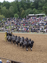 Photo: Mehrspännige Postkutsche bei der Hengstparade Moritzburg
