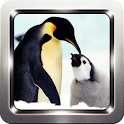 Penguin Cute Wallpapers icon