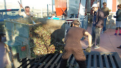 Olivareros descargando su cosecha en la segunda edición de su fiesta solidaria de Canjáyar.