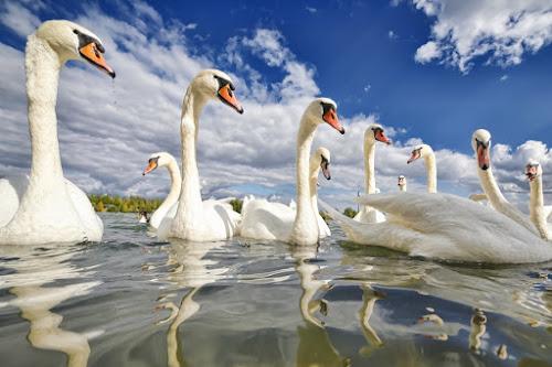 by Albin Bezjak - Animals Birds