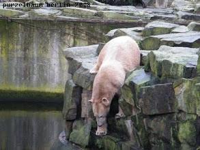 Photo: Ein ungebetener Besucher war hier !