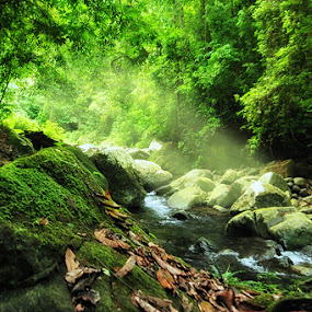 Meratus Forest by Muslim Hanafi - Landscapes Forests ( #borneo )
