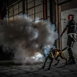 Trust by Canine Cardi - Animals - Dogs Playing ( workingdog, k9-cardi )