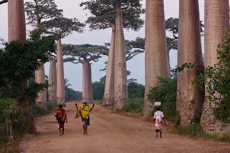 Photo: Minutes before sunrise at the Avenue of Baobabs. Morondava, Madagascar