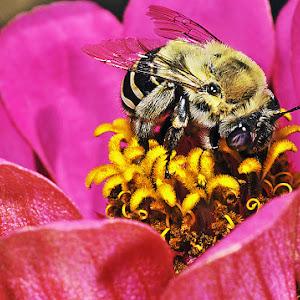 big bee.jpg