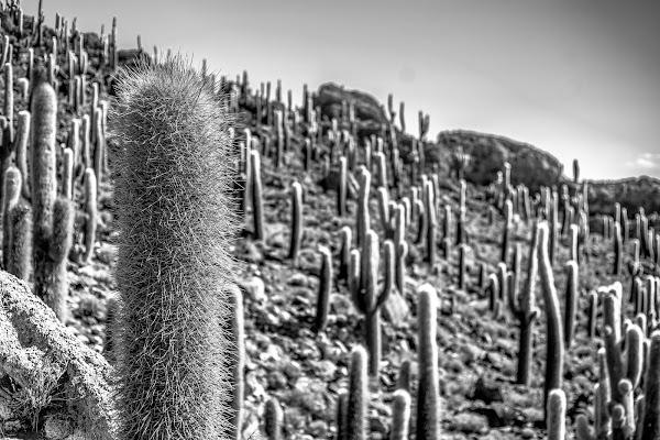 cactus! di simona_cancelli
