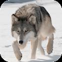 Wild Wolf Attack Simulator 3D icon