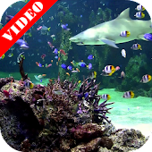Video Wallpaper: Aquarium