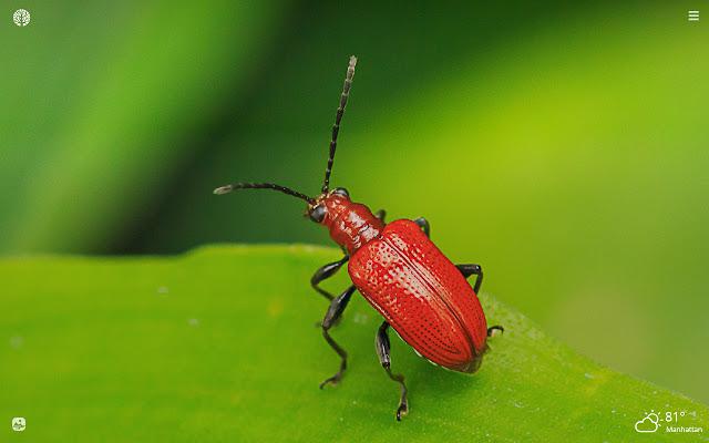 Beetles HD Wallpapers New Tab Theme