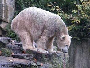 Photo: Knut laesst den Ochsenschwanz ueber dem Wassergraben baumeln ;-)
