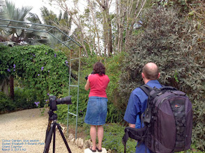 Photo: Colour Garden - Andrea Jones and Alasdair Currie photographing  the Blue Section, Queen Elizaberth II Botanic Park, Grand Cayman. Photo: Ann Stafford, March 3, 2013.