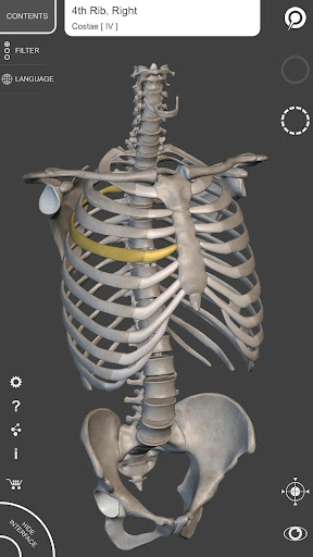 Skeleton | 3D Anatomy 2.4.3 screenshots 1
