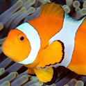 live wallpapers fish icon