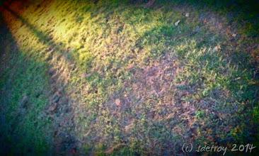 Photo: Thank for a setting sun graveyard walk with a friend.