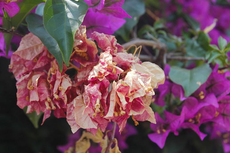 Stesso fiore , stessa pianta di Ro51