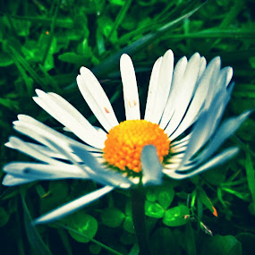 by Dragica Basaric - Flowers Single Flower